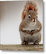 Please May I Have Some More? Metal Print