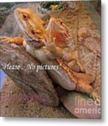 Please No Pictures Metal Print