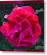 Plentiful Supplies Of Pink Peony Petals Abstract Metal Print