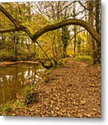 Plessey Woods Riverside Footpath Metal Print