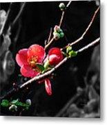 Plum Blossom 3 Metal Print