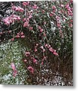 Plum Blossom In The Snow Metal Print