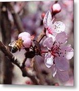 Plum Blossoms 12 Metal Print