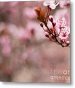 Plum Flower On Branch - Spring Concept Metal Print
