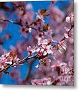 Plum Flowers And Honey Bee Metal Print