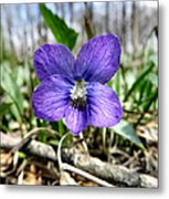 Plumb Wildflowers Metal Print
