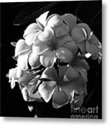 Plumeria Black White Metal Print