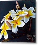 Plumeria Bouquet 2 Metal Print