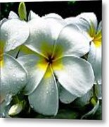 Plumeria Bunch Metal Print
