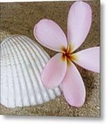 Plumeria Flower And Sea Shell Metal Print