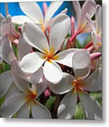 Plumerias Under A Blue Sky Metal Print