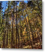 Pocono Trees Metal Print