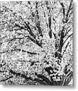 Poetry Tree Metal Print