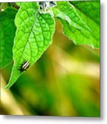 Poha Berry Beetle Metal Print