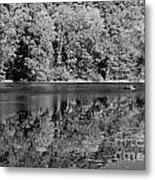 Poinsett State Park In Black And White Metal Print
