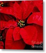 Poinsettia # 2 Metal Print