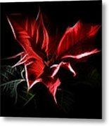Poinsettia - Christmas Flower Metal Print by Gynt