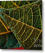 Poinsettia Green Leaf Metal Print
