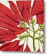 Poinsettia Pulcherrima Metal Print by WG Smith