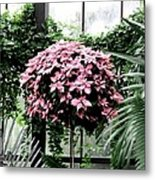 Poinsettia Tree Longwood Gardens Metal Print