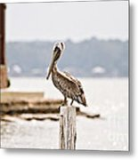 Point Clear Metal Print