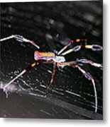 Points Of Contact - Spider - Orb Weaver Metal Print