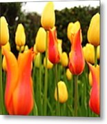 Pointy Tulips Metal Print