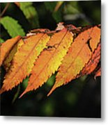 Poison Sumac Golden Kickoff To Fall Colors Metal Print