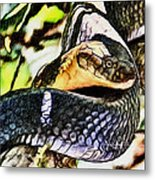 Poisonous Observance Metal Print