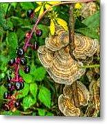 Poke And Bracket Fungi Metal Print