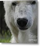 Polar Bear 3 Metal Print