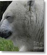 Polar Bear 4 Metal Print