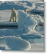Polar Bear And Cub Metal Print