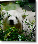Polar Bear Cub Metal Print