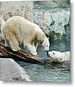 Polar Bear Kiss Metal Print