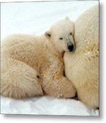 Polar Bear Mother & Cub Metal Print
