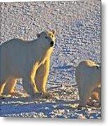 Polar Bear Mother And Cub On Ice Metal Print