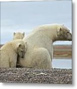 Polar Bear Snuggle Metal Print