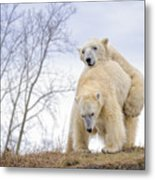 Polar Bear Spring Fling Metal Print