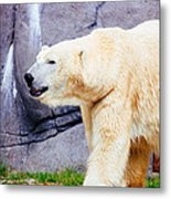 Polar Bear Walking Metal Print