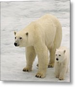 Polar Bear With Cub Metal Print