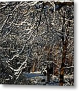 Polar Vortex Beauty Metal Print