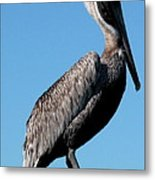 Pole With Pelican  Metal Print