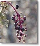 Polk Berries Metal Print
