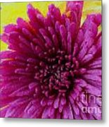 Polka Dot Purple Mum Metal Print
