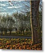 Pollard Willows In Rotterdam Metal Print