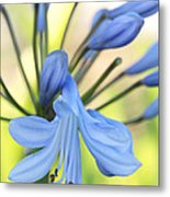 Pollen Of Purple Blue Flower  Metal Print