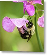 Pollination Nation Viii Metal Print