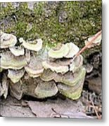 Polypore Abstract Metal Print