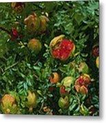 Pomegranates    Majorca Metal Print
